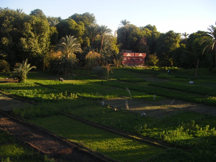 Fields on Elephantine Island in the middle of the Nile in Aswan seen from the roof of the Nubian museum.