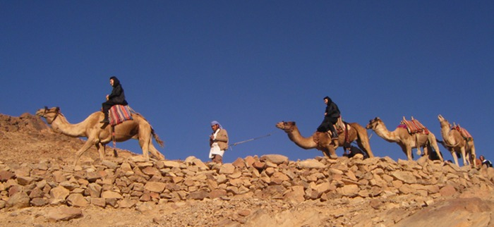 Nuns on camels!