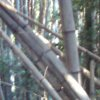 A bamboo forest I walked through on the way down from Mount Sarakura.