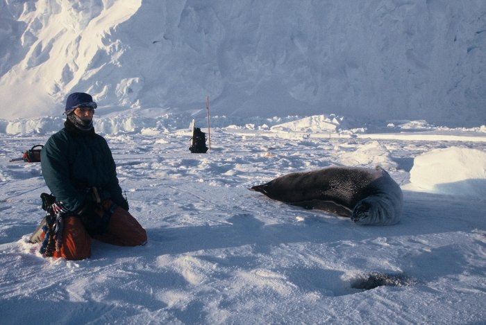 A Weddell seal and myself on the sea ice at Halley on my post-Midwinter trip.